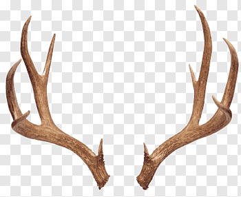 Deer Antlers cutout PNG & clipart images.