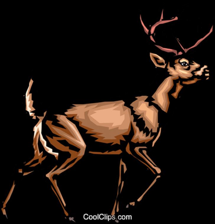 whitetail deer clip art image.
