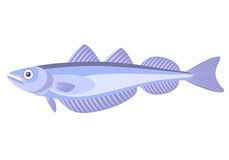 Whiting Fish Stock Illustrations.