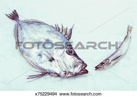 Stock Photo of John Dory fish and Whiting on ice x75229494.