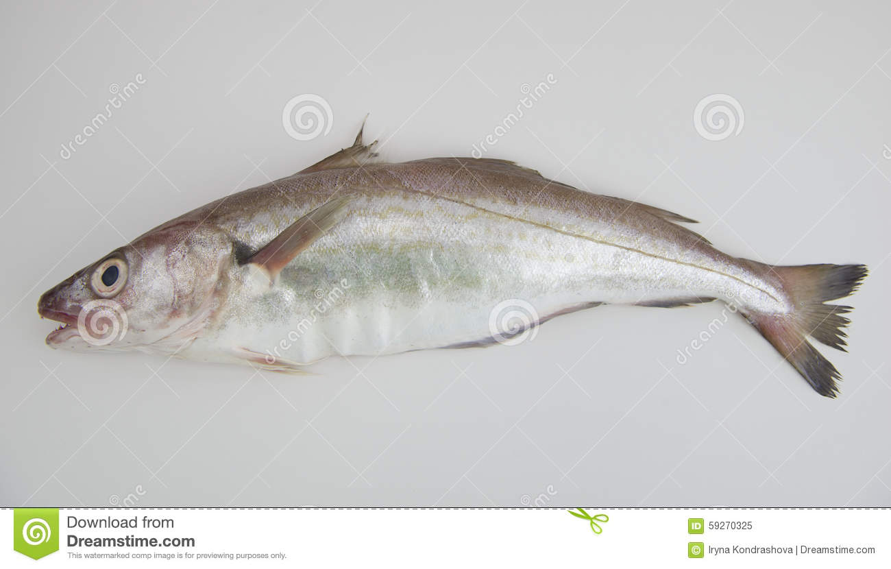 Whiting Stock Photos, Images, & Pictures.