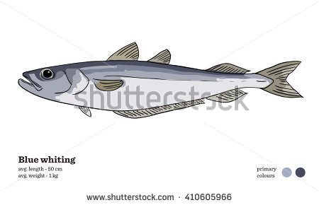 Whiting clipart #15