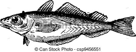 Vector Clip Art of Whiting or Merlangius merlangus, vintage.