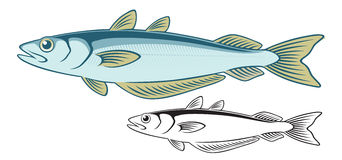 Blue Whiting ( Fish ) Royalty Free Stock Photo.