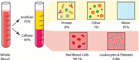 The molecular composition of whole blood. The molecular.