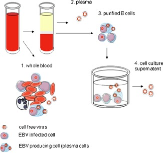 Whole blood fractionation into different biological.