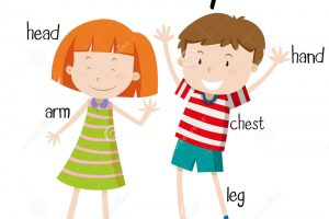 Whole body clipart 5 » Clipart Station.