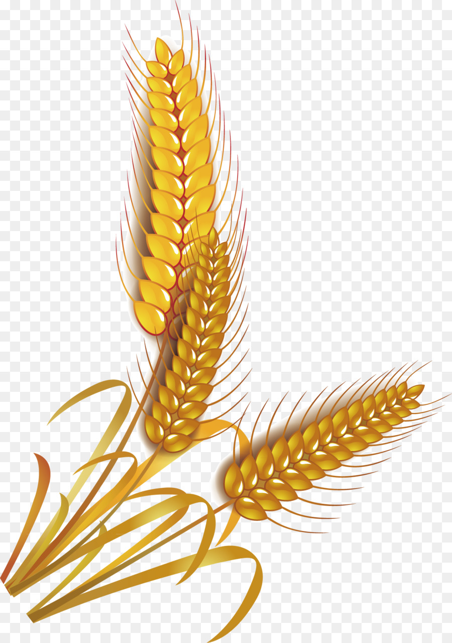 2346 Wheat free clipart.