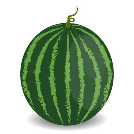 703 Whole Watermelon Stock Vector Illustration And Royalty Free.