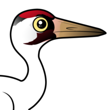 Cute Whooping Crane by Birdorable < Meet the Birds.