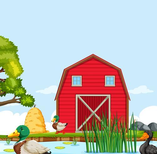 Rural farm house landscape.