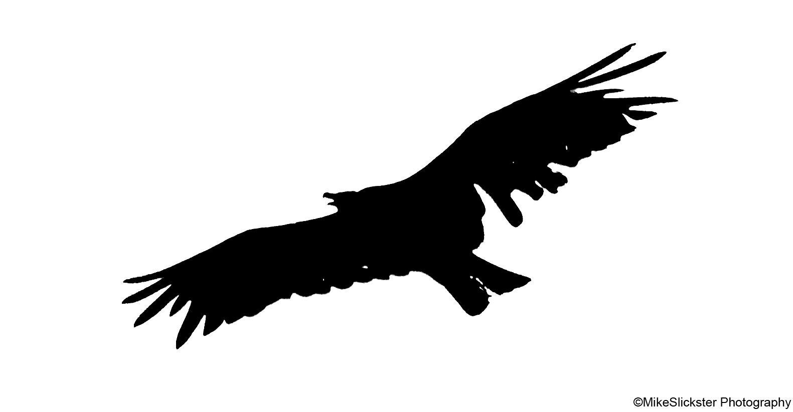 Vulture Silhouette in 2019.