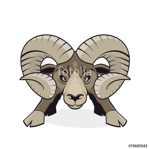 Bilder und Videos suchen: mufflon.