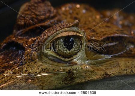 Cayman Eye Reflection Stock Photos, Royalty.