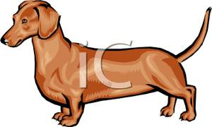 Art Image: A Brown Wiener Dog.