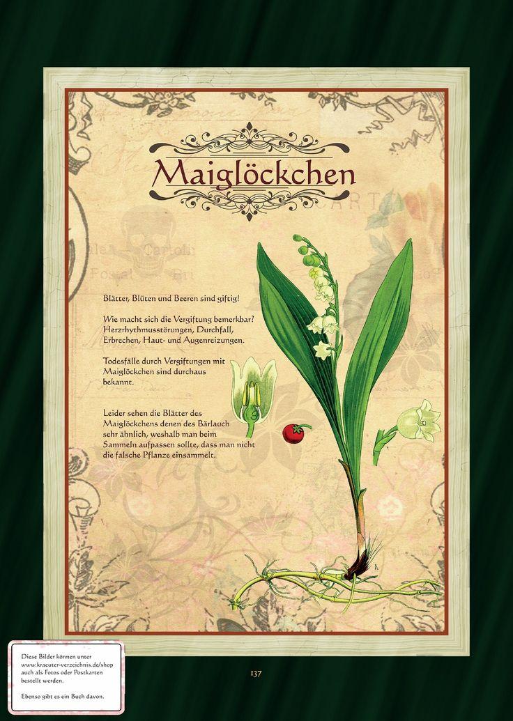 1000+ images about Alchemie Kräuter Pflanzen on Pinterest.