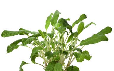 "Search photos ""herbal medicine""."