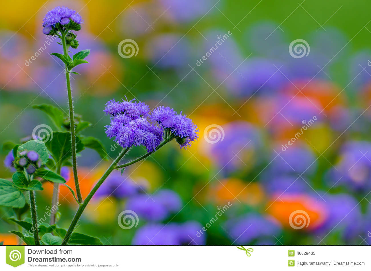 Purple Wild Flower.