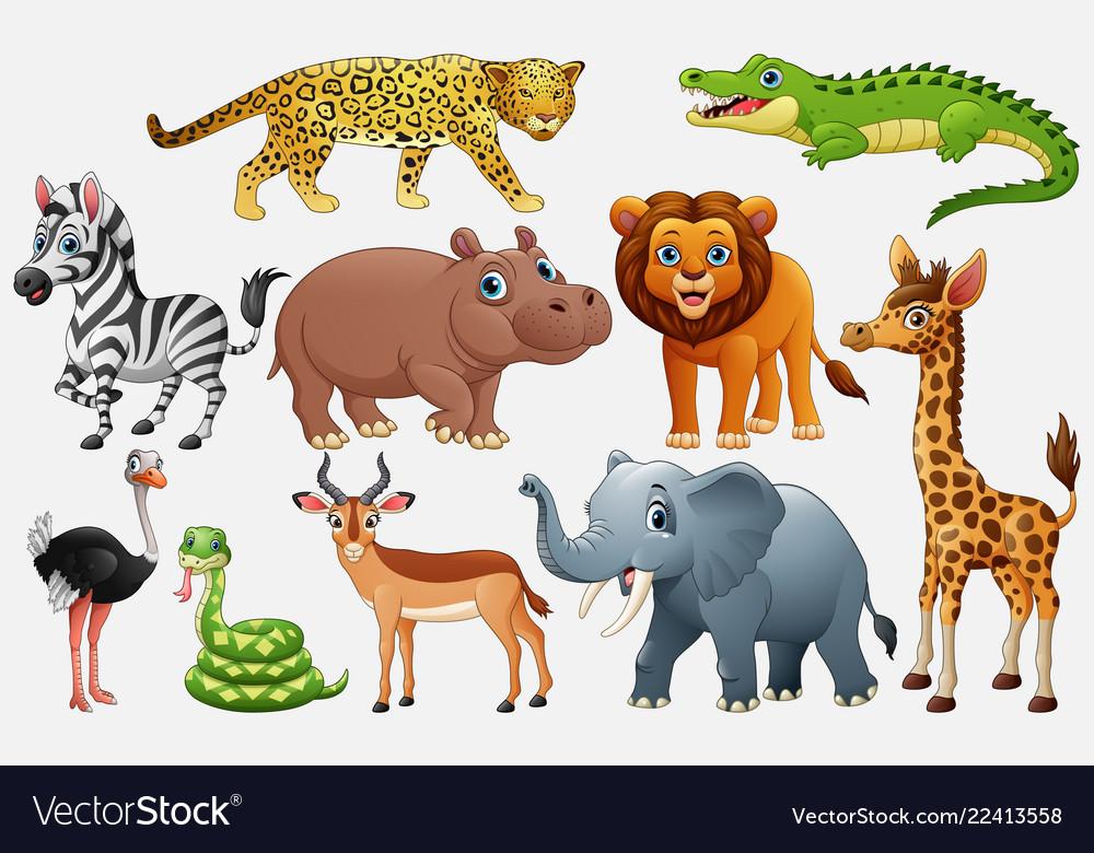 Cartoon wild animals on white background.