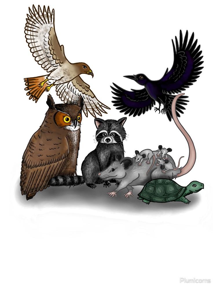 Wildlife Montage.
