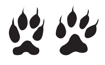 Animal Footprint Clipart.