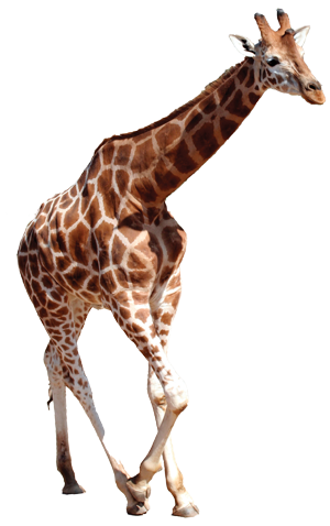 Download Free png Wild Animals PNG PlusPNG.com.