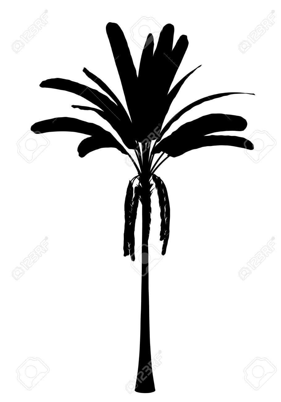 Silhouette Of Wild Banana Palm Tree Isolated On White Background.
