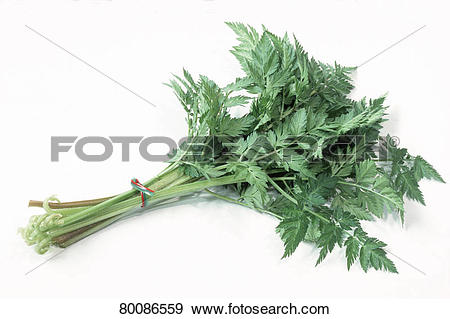 Stock Photograph of DEU, 2003: Cow Parsley, Wild Chervil, Wild.