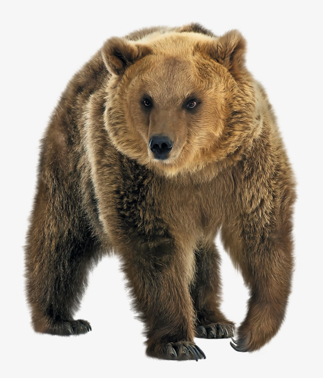 Wild brown bear PNG clipart.