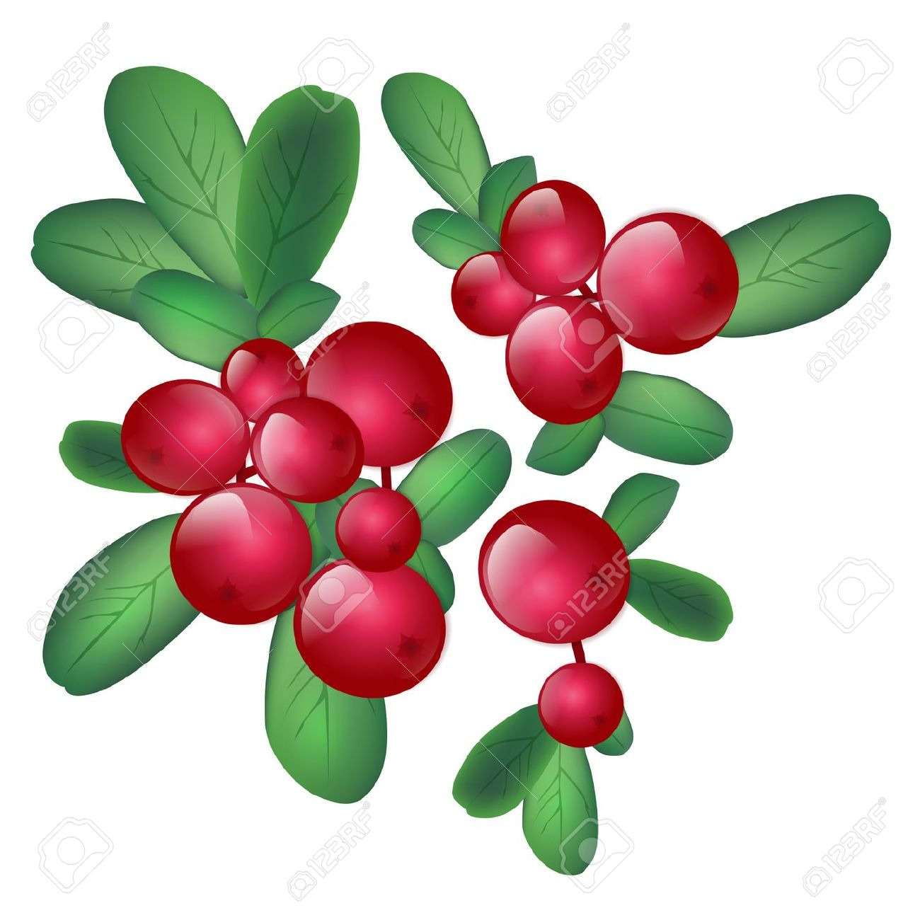 Wild berries clipart.