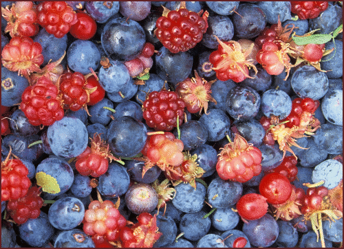 Free Berry Clipart, 2 pages of Public Domain Clip Art.