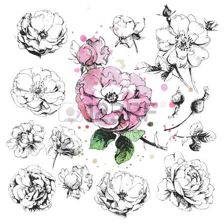 169,947 Rose Cliparts, Stock Vector And Royalty Free Rose.