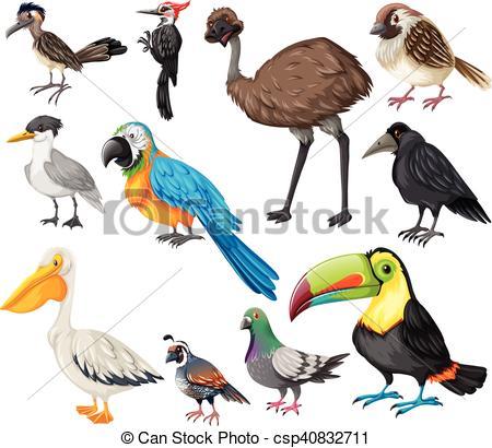 Vector Clip Art of Different types of wild birds illustration.