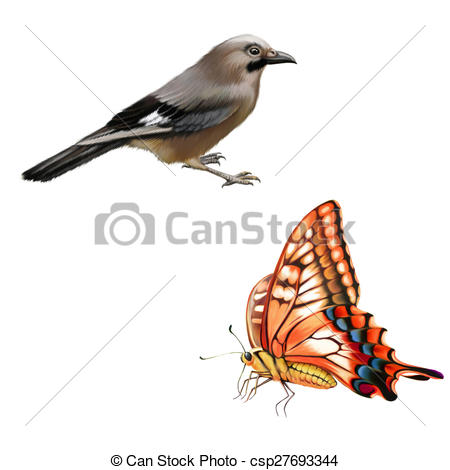 Drawing of Old World Swallowtail butterfly, Wild bird.