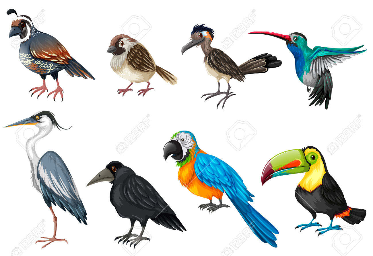 Different Types Of Wild Birds Illustration Royalty Free Cliparts.
