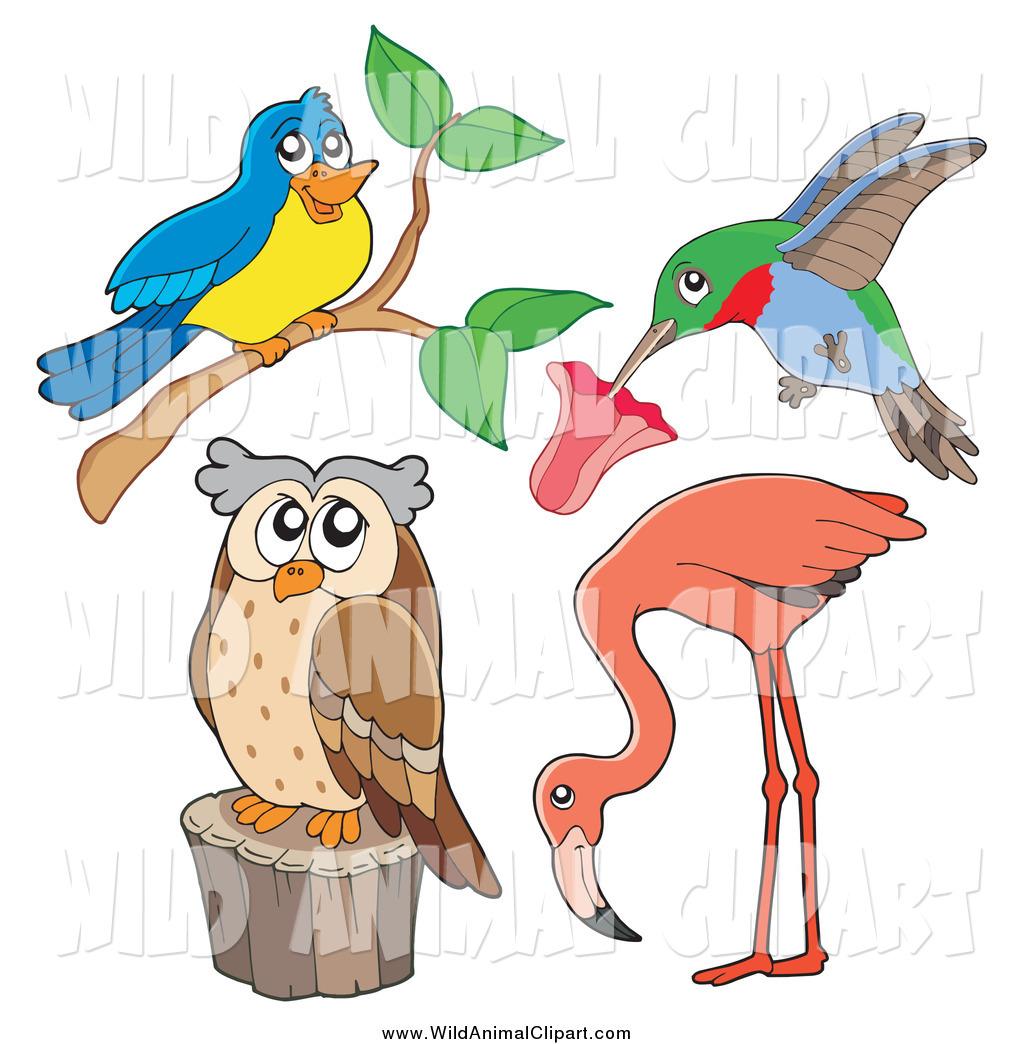 Clip Art of a Wild Bird, Hummingbird, Flamingo and Owl by visekart.