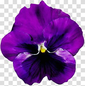 Blue Iris Flower, Pansy, Violet, Vase, Flower Bouquet.
