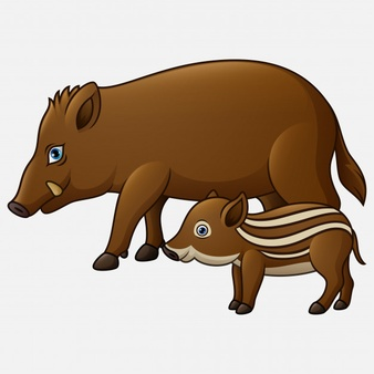 Wild Boar Vectors, Photos and PSD files.