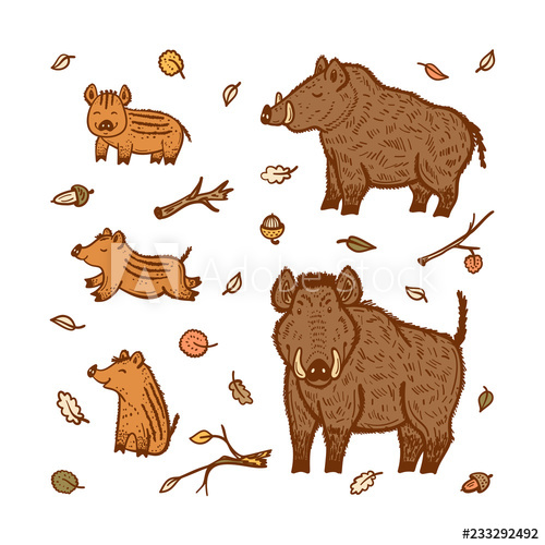 Boars Vector Set. Hand Drawn Doodle Wild Pig and Wild Boar.