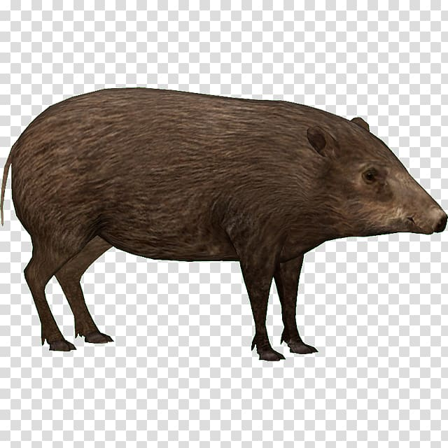Zoo Tycoon 2 Peccary Wild boar Capybara Pygmy hog, others.