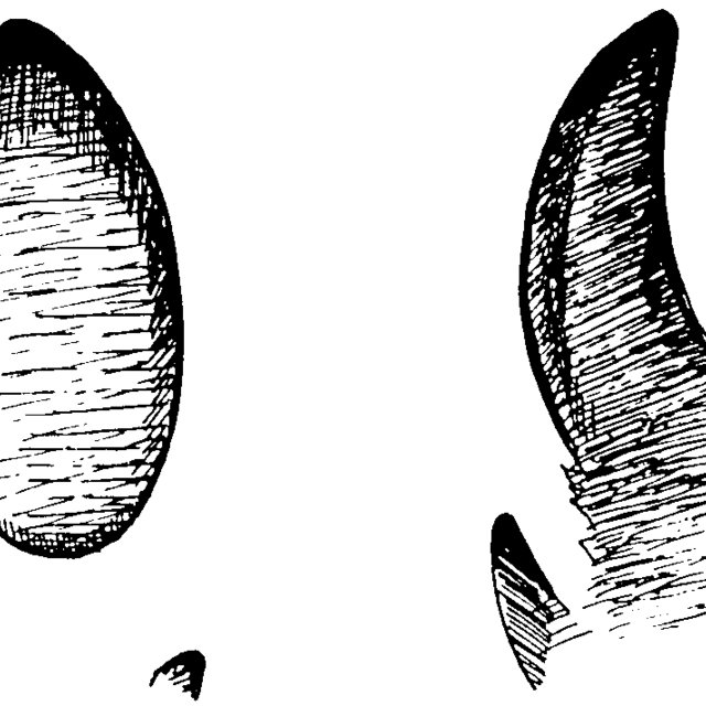 Tracks of the feral hog (left) and European wild boar (right.