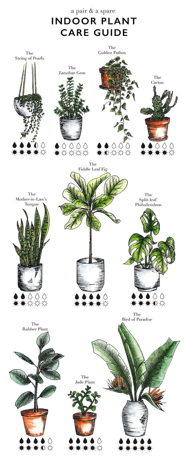 1000+ images about plantas on Pinterest.