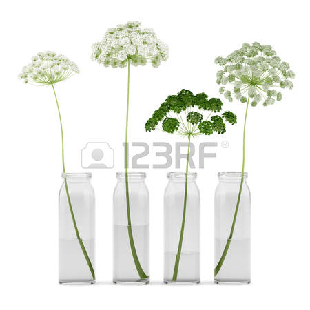 Wild Carrot Cliparts, Stock Vector And Royalty Free Wild Carrot.