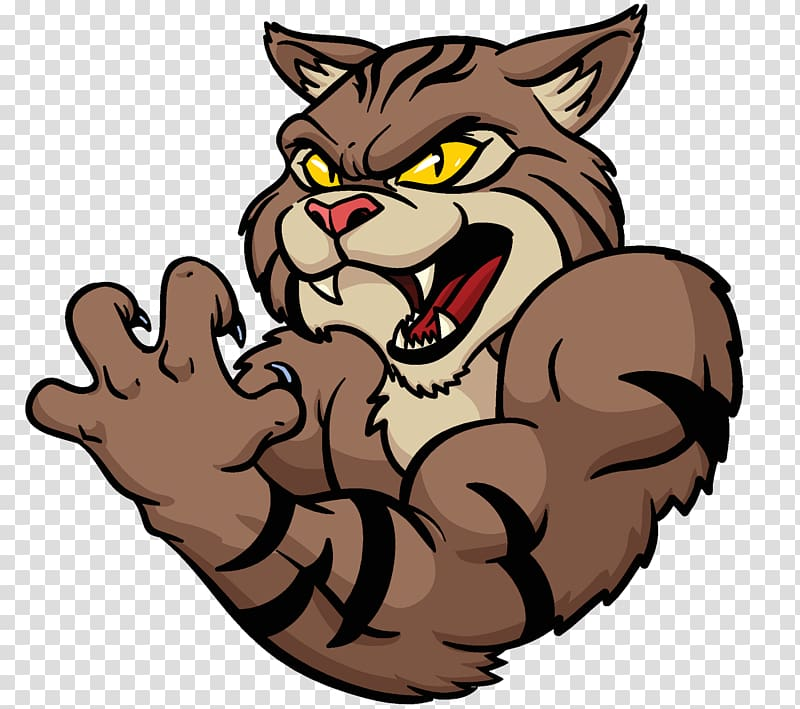 Wildcat , Cat transparent background PNG clipart.