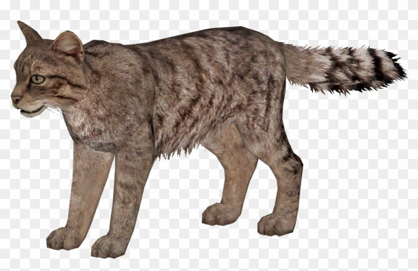 Wildcat Png.