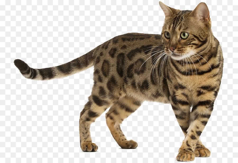 Wild Cat Png & Free Wild Cat.png Transparent Images #10883.
