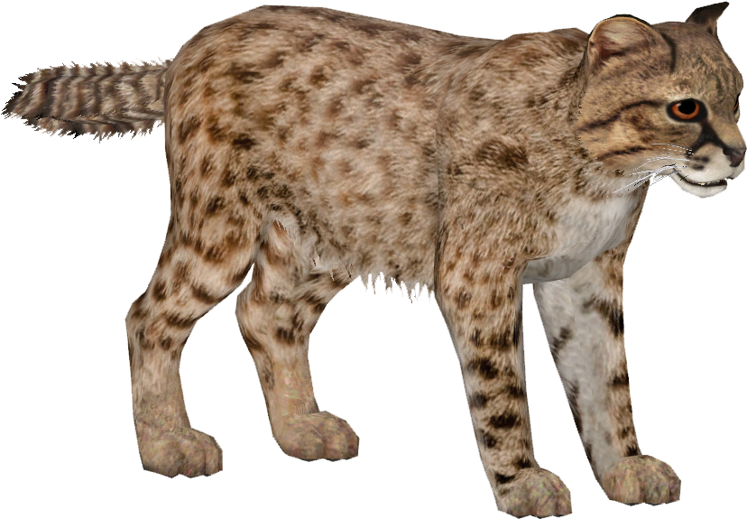 HD Wild Cats Png.