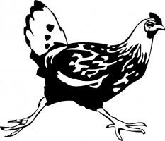 Chicken clip art of a wild turkey.