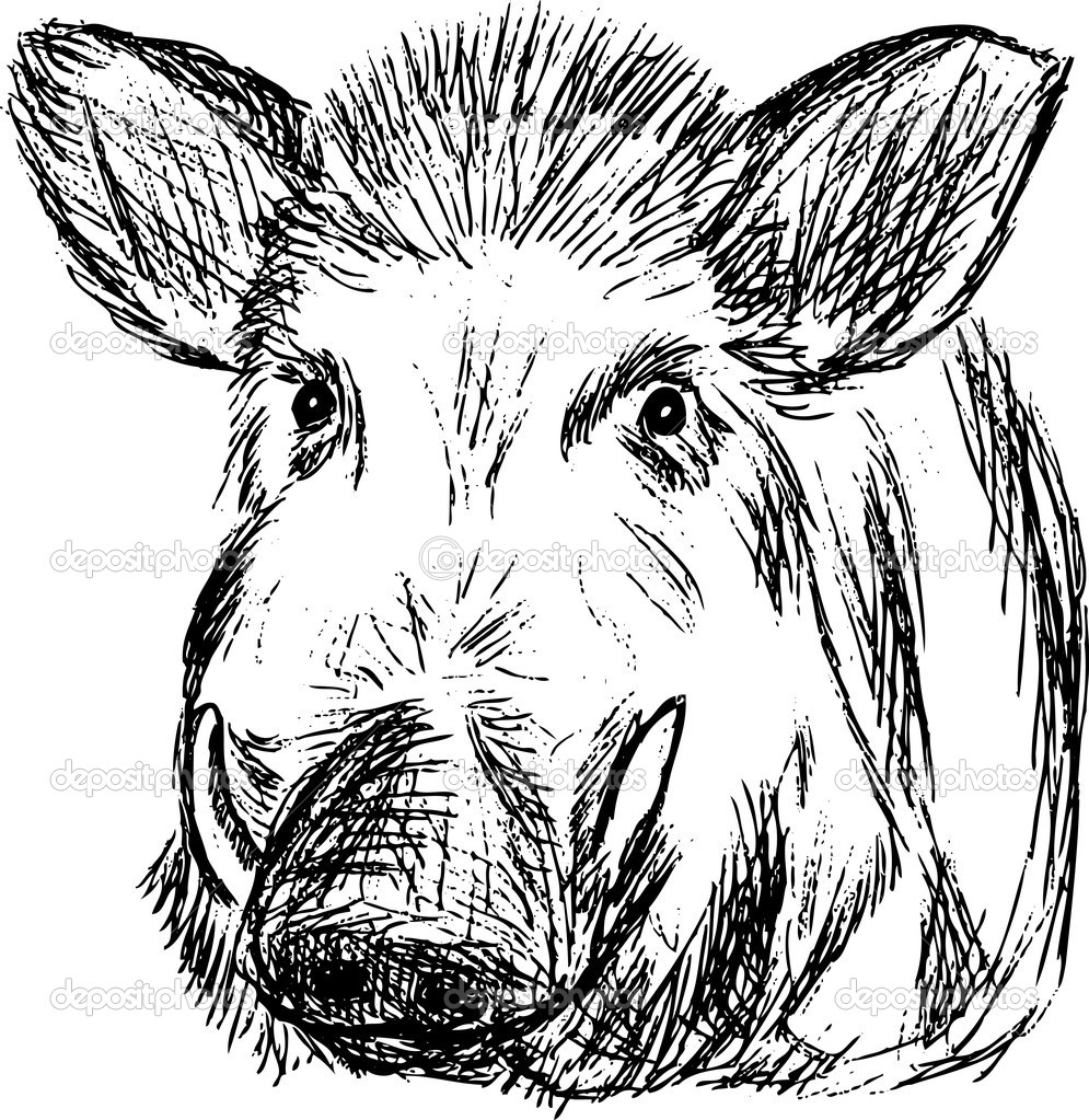 Wild boar — Stock Vector © pavelmidi #3285700.