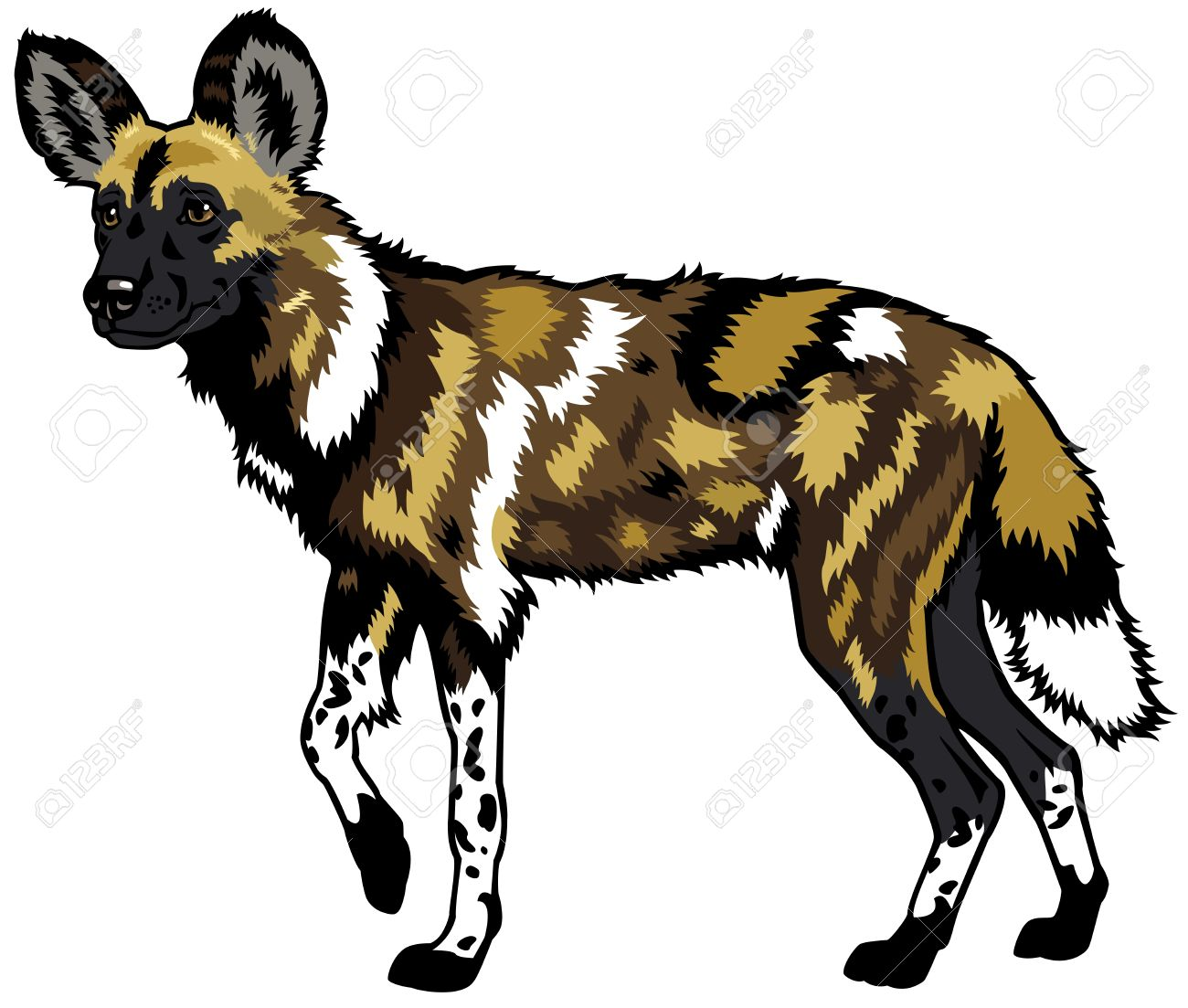 12,189 Wild Dog Stock Illustrations, Cliparts And Royalty Free.